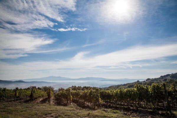 vini-olio-biologico-toscano-gramineta-chi-siamo-1