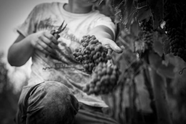 vini-olio-biologico-toscano-gramineta-chi-siamo-5