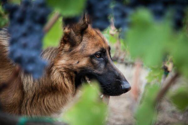 vini-olio-biologico-toscano-gramineta-chi-siamo-6