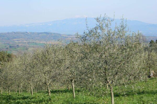 vini-olio-biologico-toscano-gramineta-chi-siamo-7